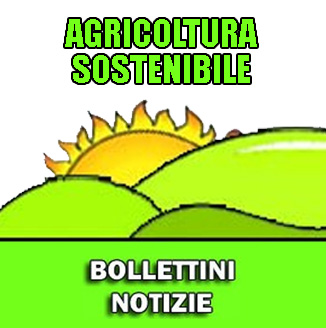 Assistenza Bollettini