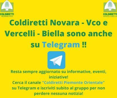 Siamo anche su Telegram!